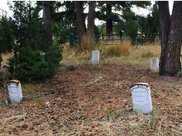 男子為找660萬寶藏私挖墓地,結果被判6個月,還要賠償21萬
