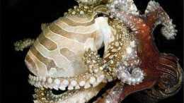 章魚智商到底有多高, 為何有人科學家認為它不是地球生物?